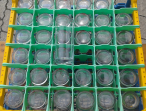 Trinkglas 0,3 Liter